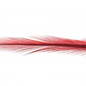 Coq de Leon Tailing Pack (Red)