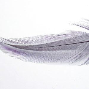Coq de Leon Tailing Pack (Purple)